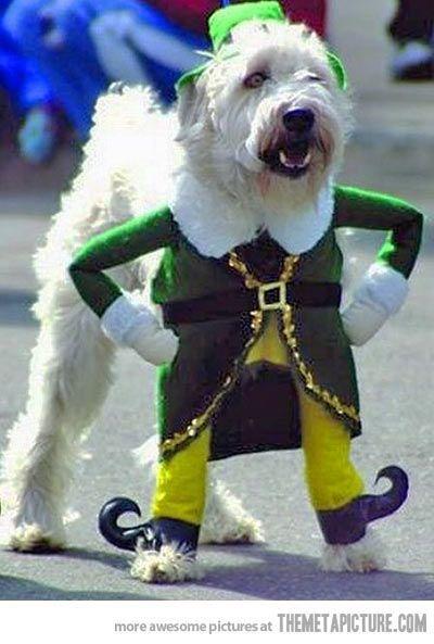 Little Leprechaun Pet Costumes Dog Costumes Irish Dog