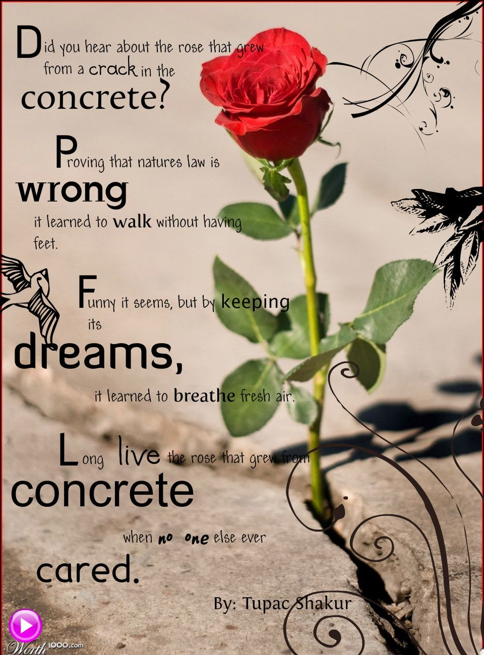 poetic analysis rose that grew from The rose that grew from concrete characters tupac shakur this study guide consists of approximately 21 pages of chapter summaries, quotes, character analysis, themes, and more - everything you need to sharpen your knowledge of the rose that grew from concrete.