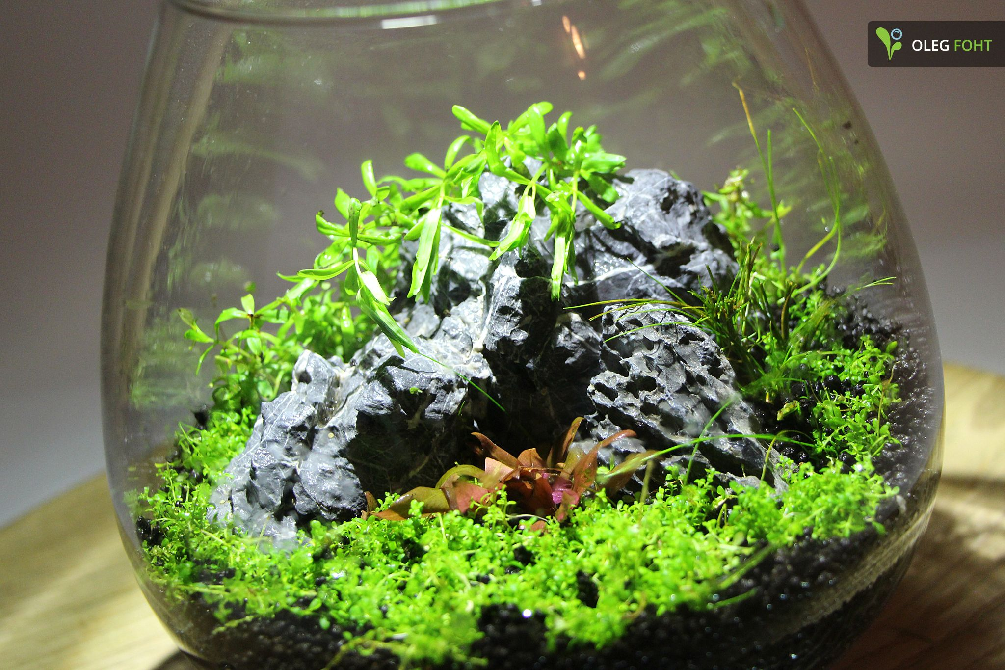 wabi kusa schale aquascaping pinterest terraria moss terrarium and gardens. Black Bedroom Furniture Sets. Home Design Ideas