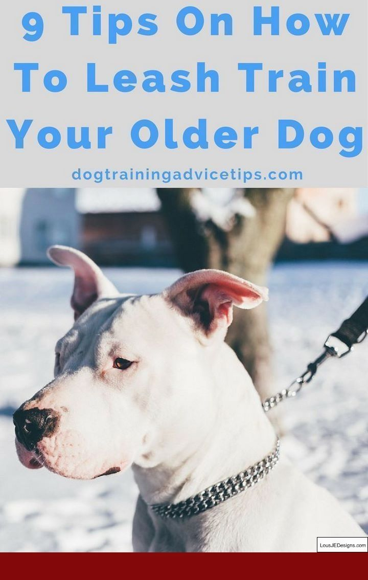 Cattle Dog Training Tips And Pics Of How Do You Train A Dog Not To