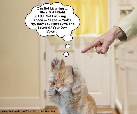 Image result for cat-, listening to its own voice- Images