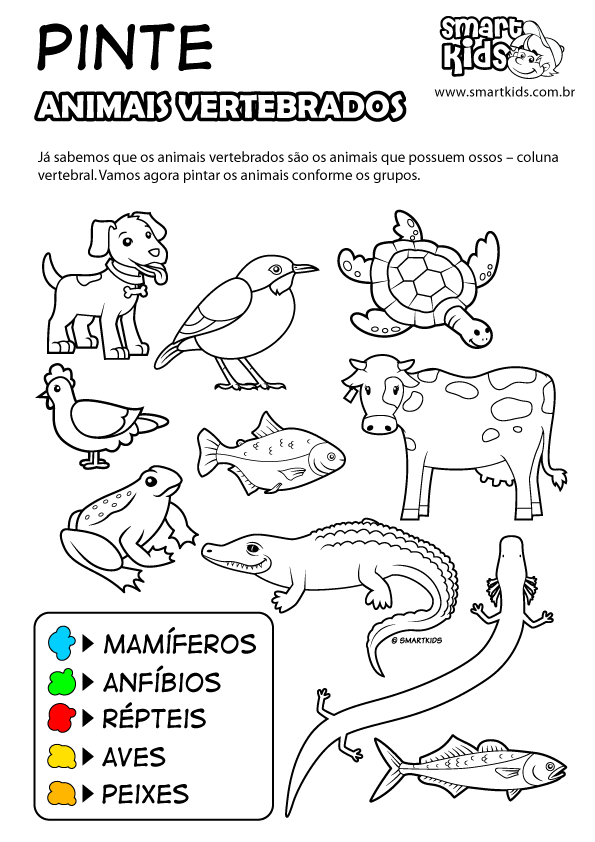 Colorir Desenho Animais Invertebrados Pinte Atividades Animais