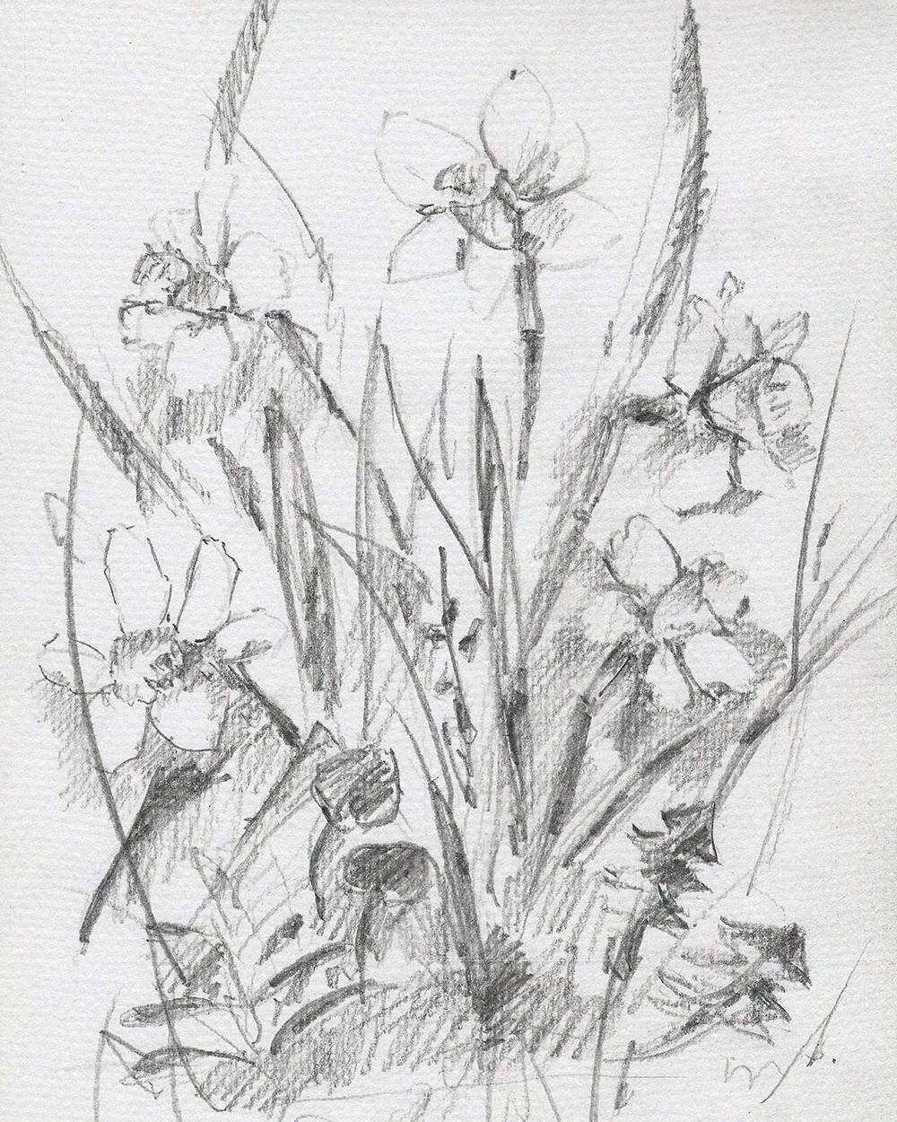 Pencil pencilsketch album talentedpeopleinc spring flowers