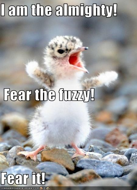Image result for tiny bird fear me