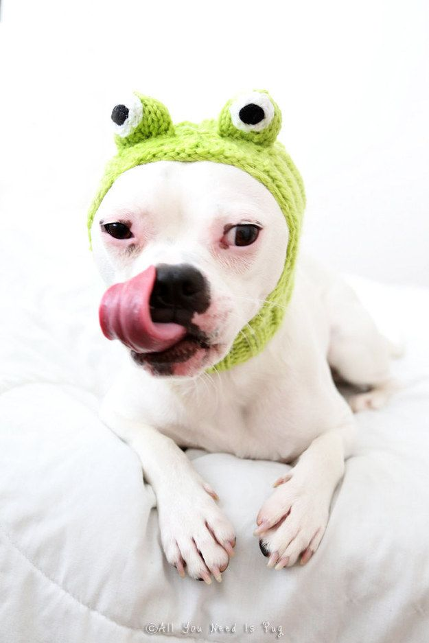 A knit hat that will turn your dog into a frog.