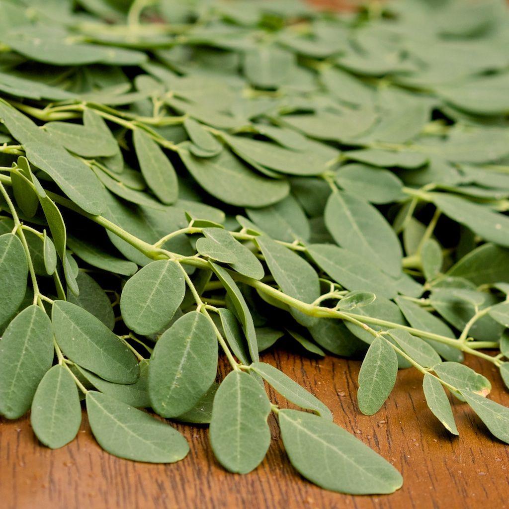 Fresh Moringa Leaves For Sale Buy Moringa Leaves Online Limited Supply Moringa Leaves Moringa Recipes Benefits Of Moringa Leaves