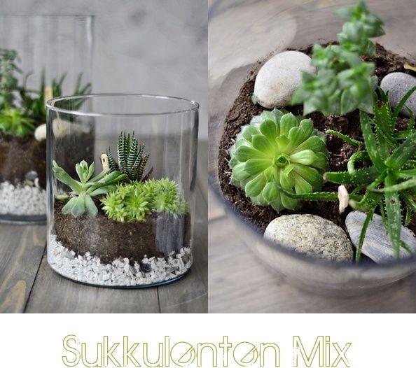 S I N N E N R A U S C H: Nachmachtipp | Diy Wohnen / Living ... Mini Garten Aus Sukkulenten Selber Machen