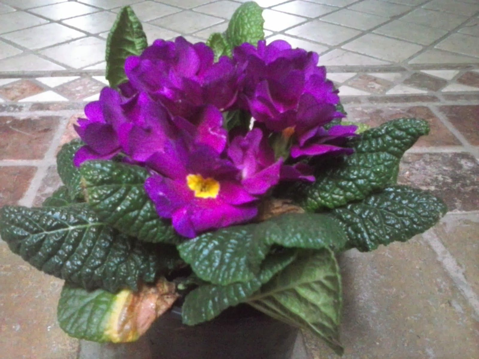 Entre patios y plantas flores para primavera y verano - Plantas con flor de interior ...