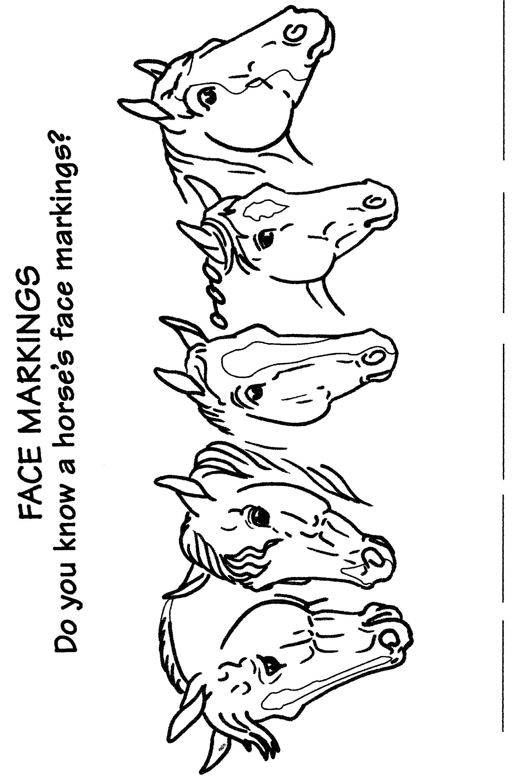 Face Markings Fill In The Blank Hand Out Horse Pinterest