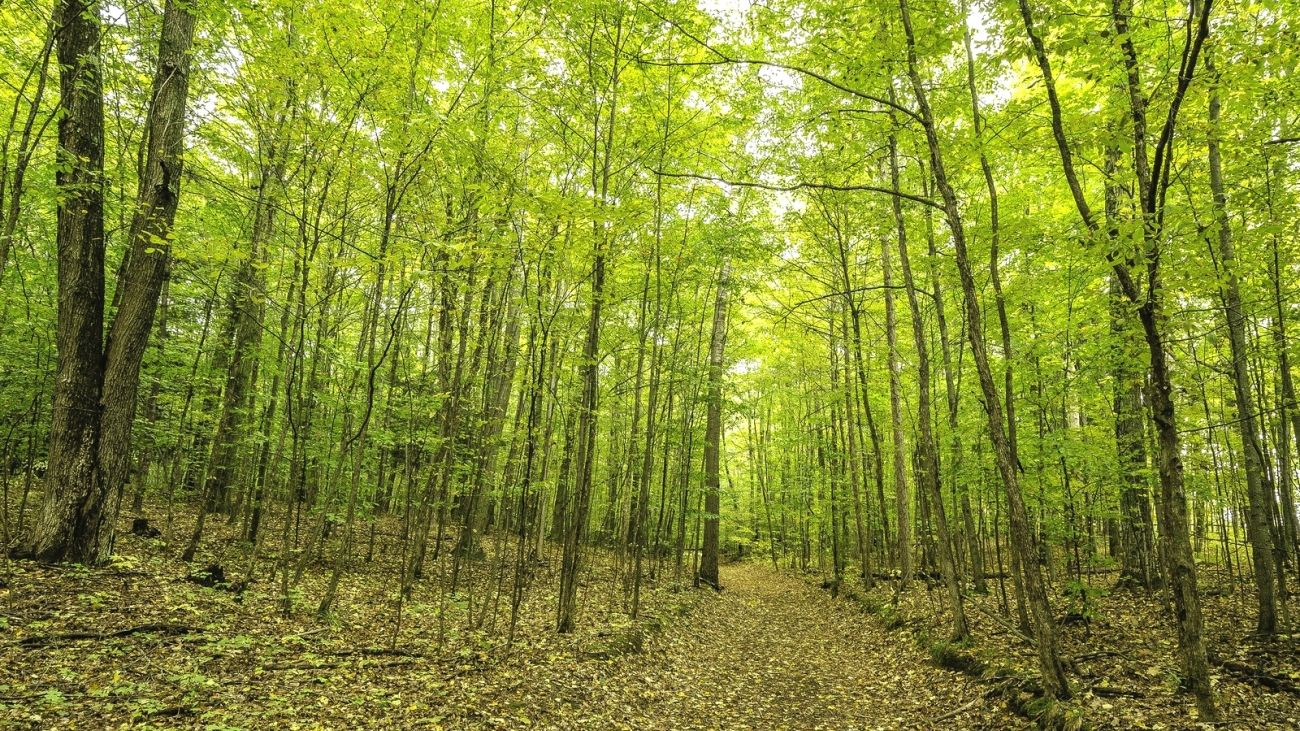 Download Nature Autumn Forest Trees Road 2k 4k Wallpaper