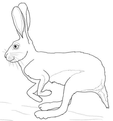 Running Desert Hare Coloring Page Animal Coloring Pages Rabbit Colors Coloring Pages