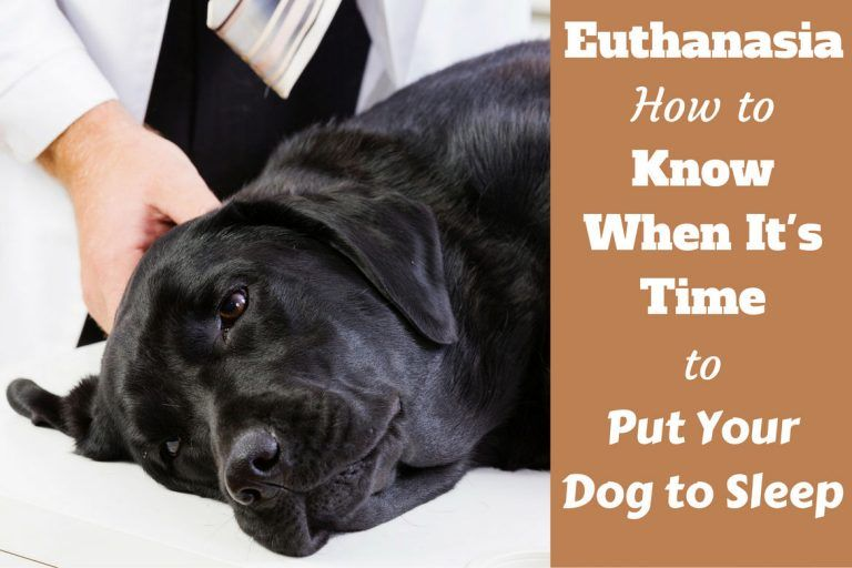 When To Put Your Dog Down Tips How To Know It S Time To Euthanize A Dog Putting Dog To Sleep Your Dog German Shorthaired Pointer
