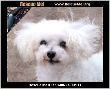 Colorado Maltese Rescue Adoptions Rescueme Org Maltese