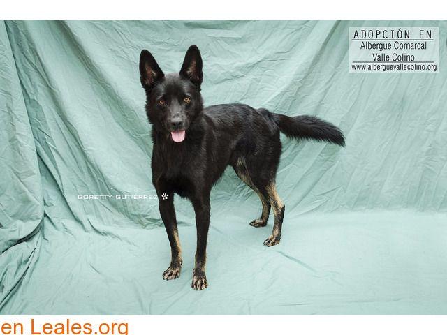 Perros En Adopción España Santa Cruz De Tenerife Tenerife Perros En Adopcion Perros Adopcion