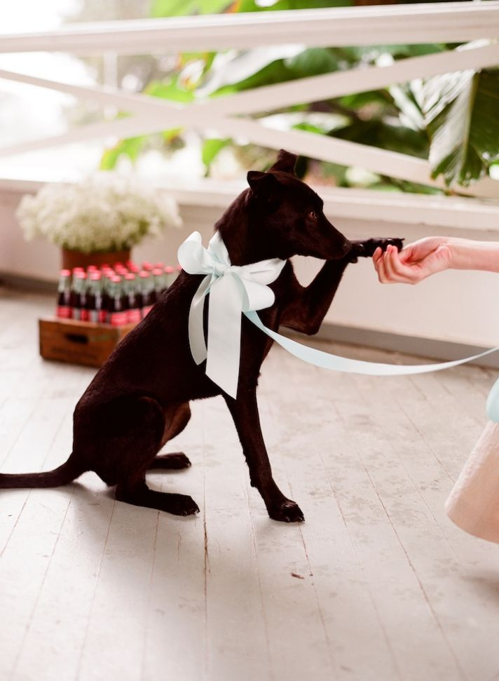 Romantic Wedding Details Outdoor Weddings Ring Bearer Puppy Full