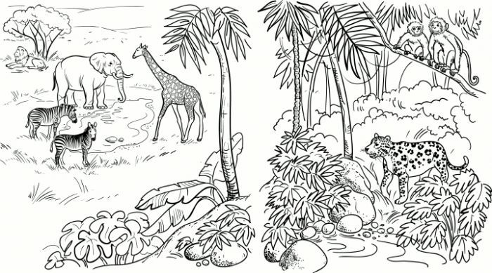 Safari Coloring Pages African Animals Animal Coloring Pages
