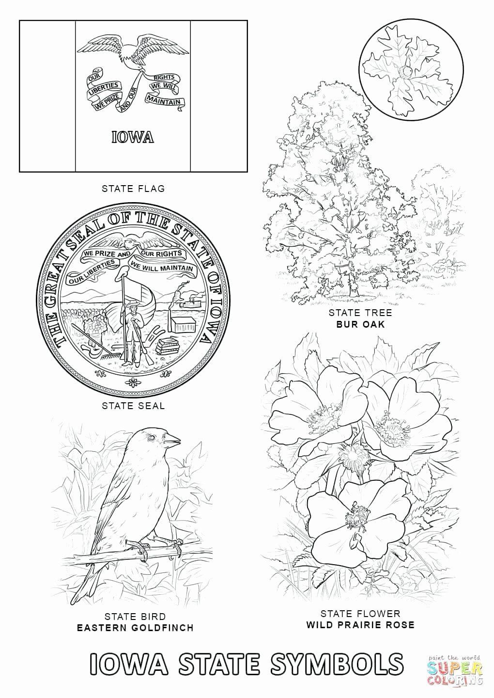 California State Bird Coloring Page Inspirational Kentucky State Symbols Species Ky State Symbols Worksheet