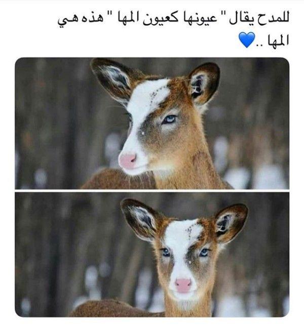 Pin By 3zah Algamdi On Quotes Beautiful Arabic Words Arabic Quotes Funny Arabic Quotes