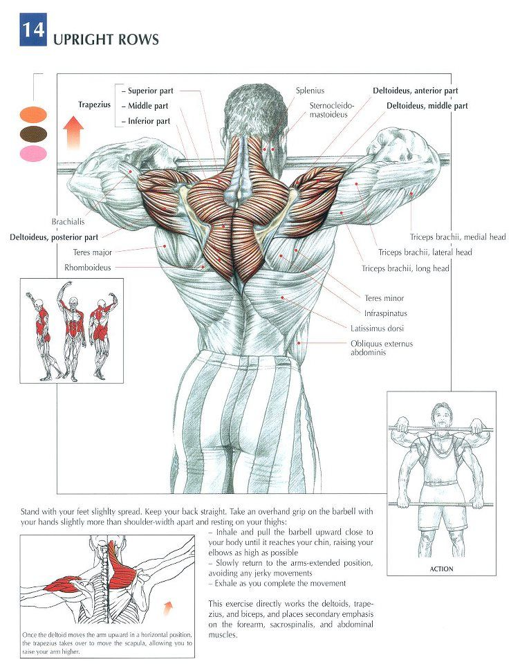 The Anatomy of The Upright Row Workout | Workout, Shoulder and Exercises