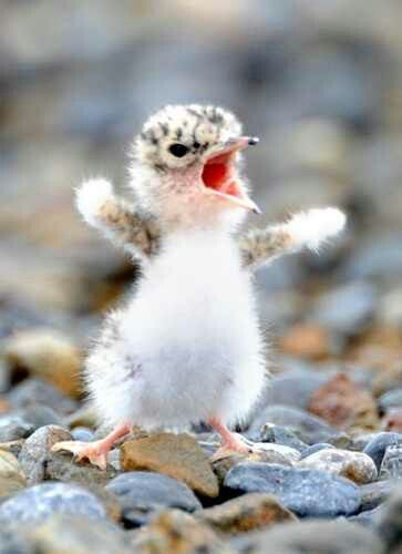 Baby Seagulls | Cute Animals | Funny animal quotes, Animal