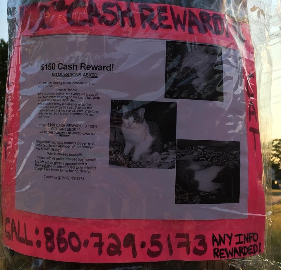 Karin BarthPhoenix Rising Equine Rescue LOST NORTH