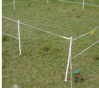 Entrancing Invisible Fence For Blind Dogs And Small