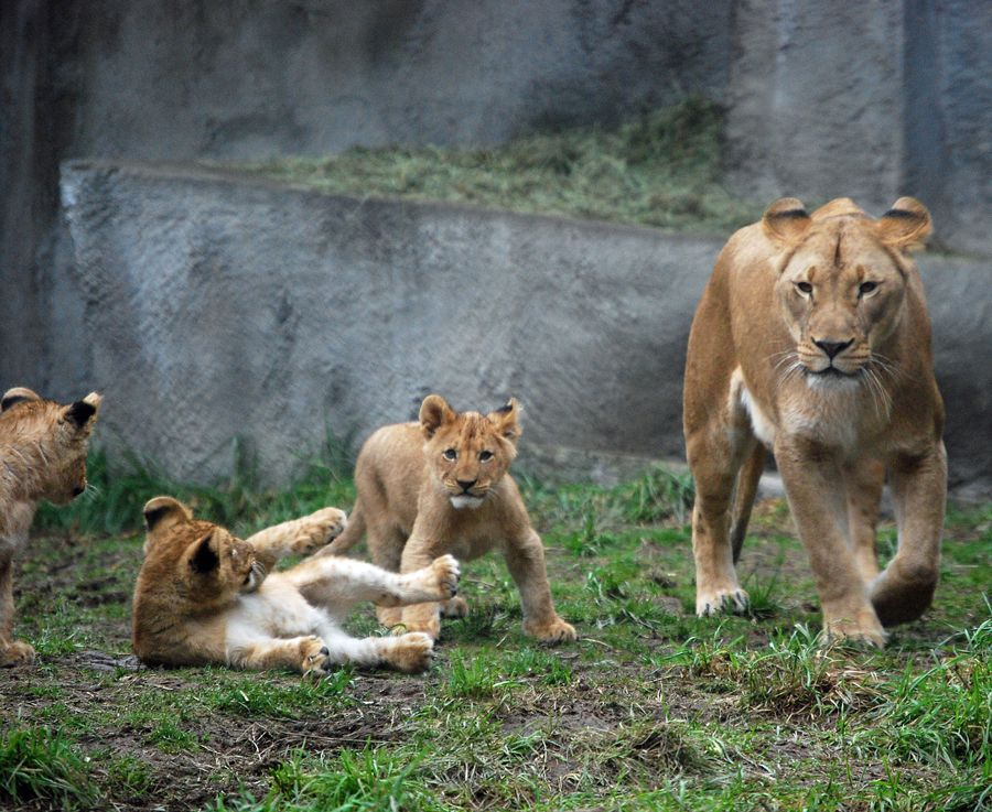 Hours And Admission Rates Woodland Park Zoo Seattle Wa Woodland Park Zoo Fun Places To Go Zoo