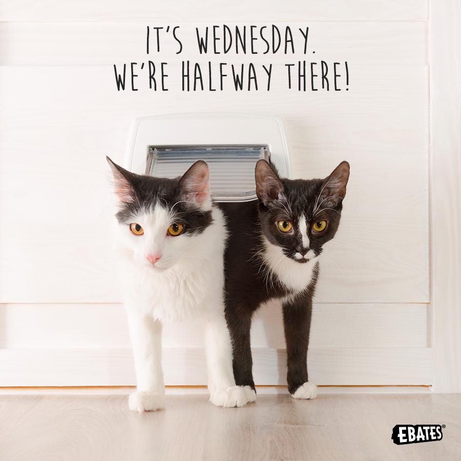 Resultado de imagen de happy wednesday cat