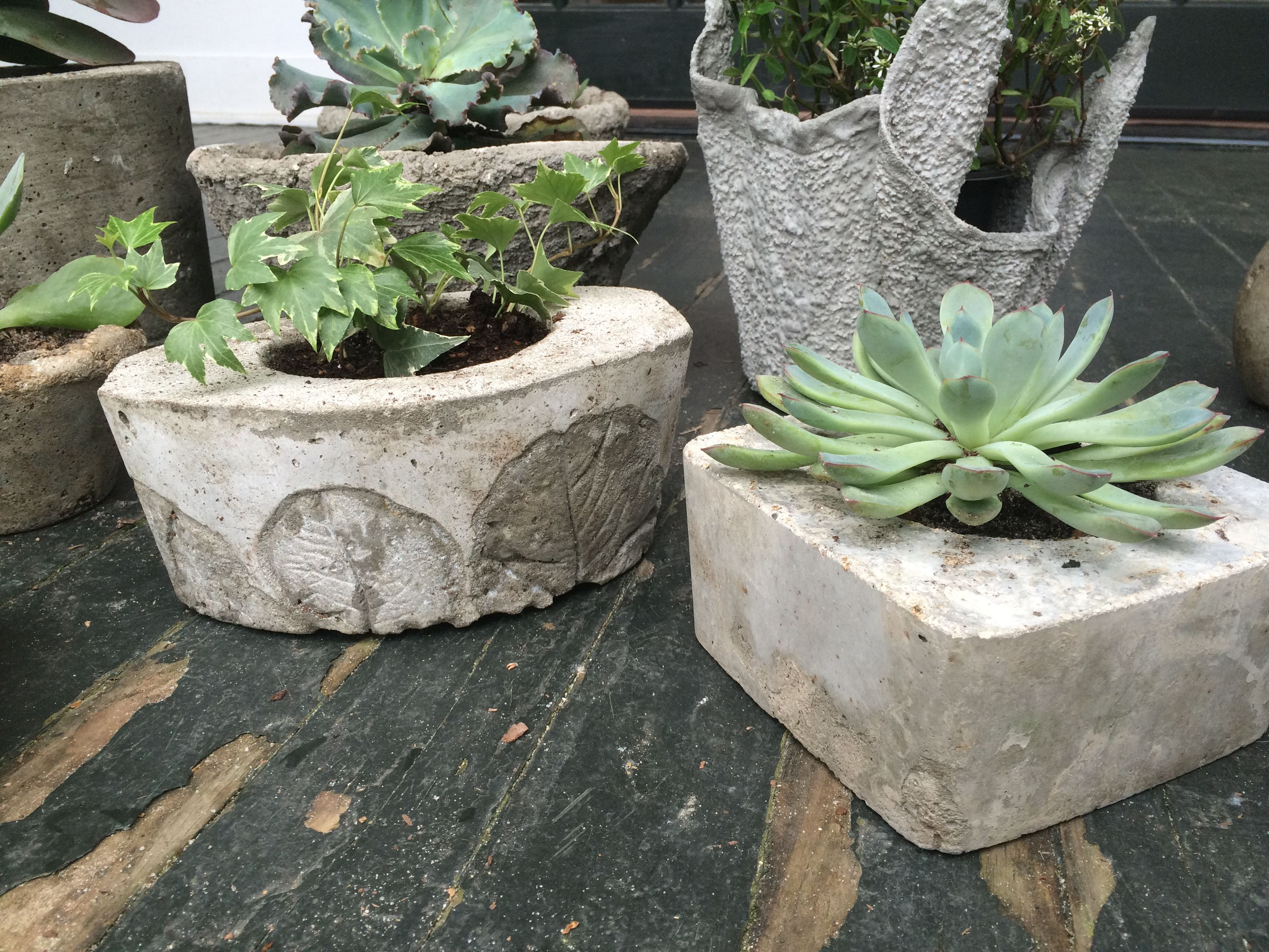 Happy succulents and ivy in concrete planters, the one on the left is imprinted with butter leaf lettuce.