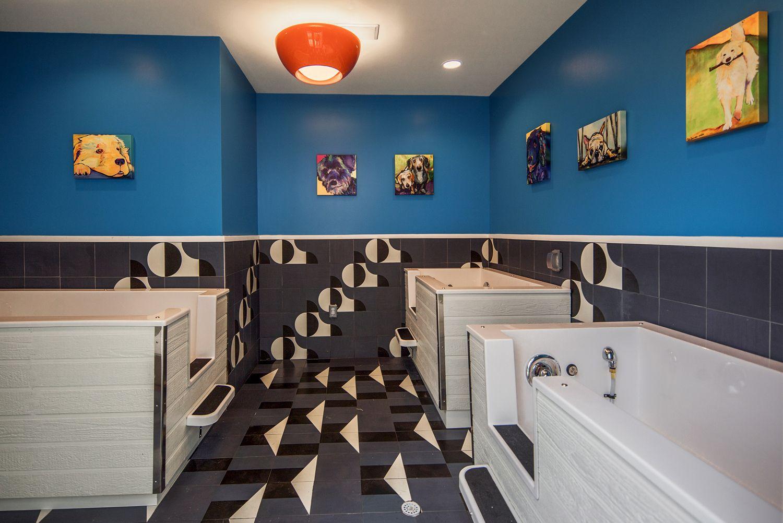 Pet Spa Commercial interiors, Pet spa, Interior