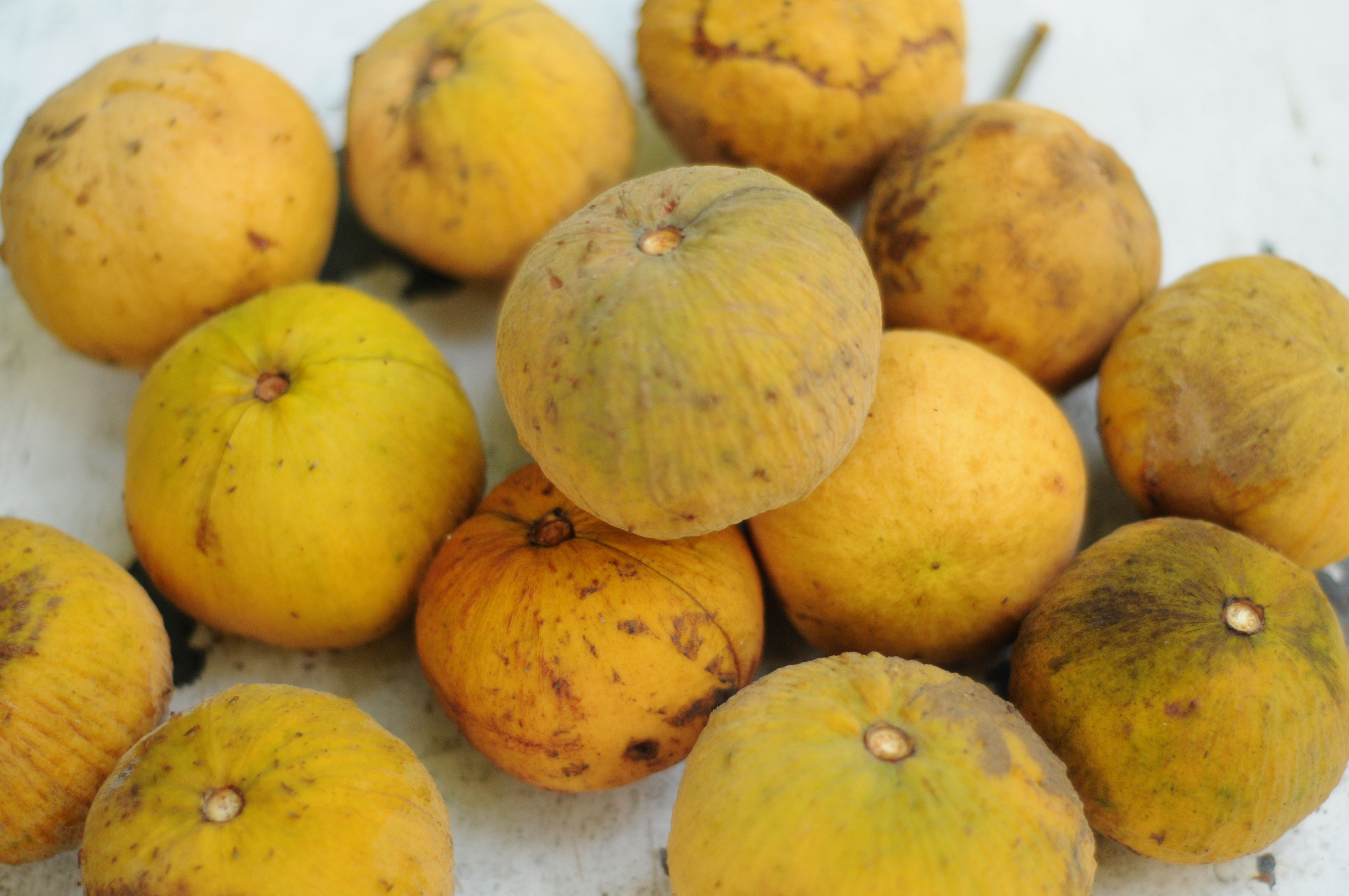 santol fruit from the philippines Fruit, Filipino, Food