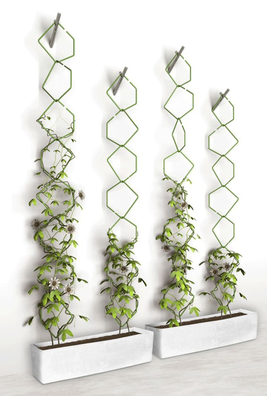 Marvelous Indoor Vines and Climbing Plants Decorations 32 Irrigation and irrigation systems for vertical garden forms In most cases a vertical structure takes place witho...