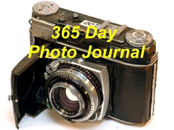 Just got my new camera so I will be starting my 365 photo journal very soon!!!