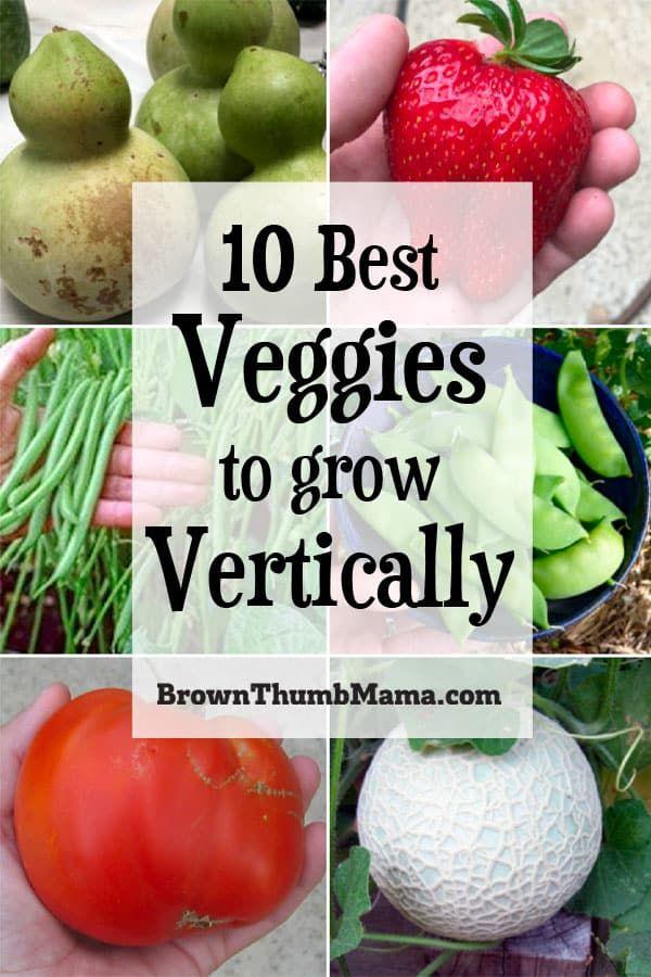 10 Best Vegetables to Grow Vertically – Growing vegetables in pots