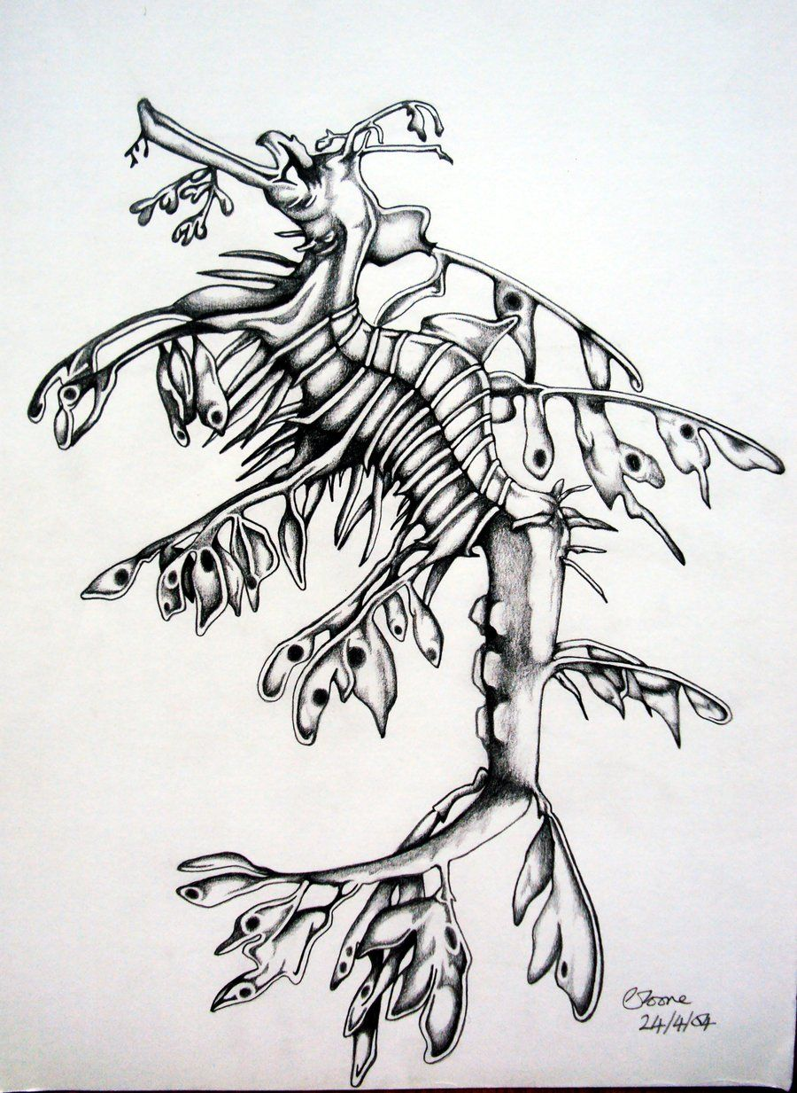 Leafy Sea Dragon Drawing Leafy Sea Dragon 1 By Clvmoore D4a3c9j