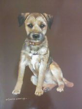 Border Terrier Sitting Dog Picture Print By Pollyanna Pickering