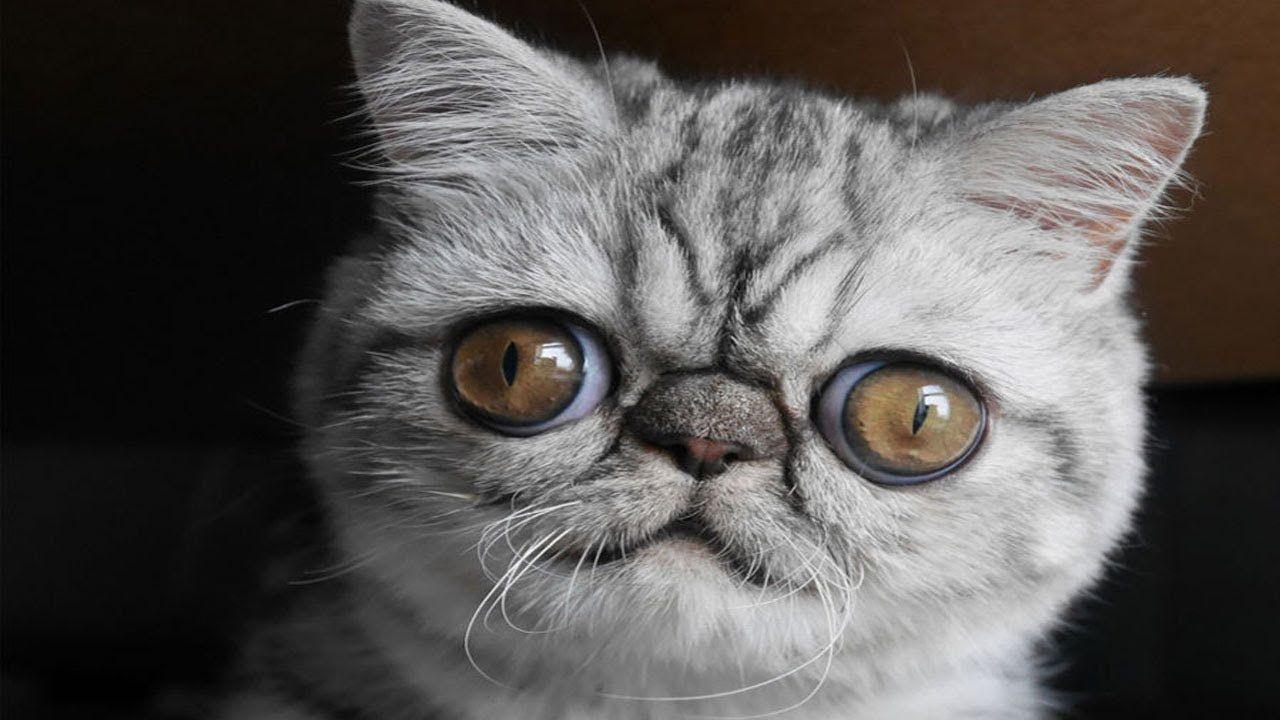 Рокеру барабанщику, смешные коты фотки ржака