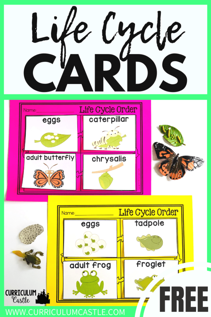 FREE Butterfly & Frog Life Cycle Sequencing Cards | Curriculum Castle