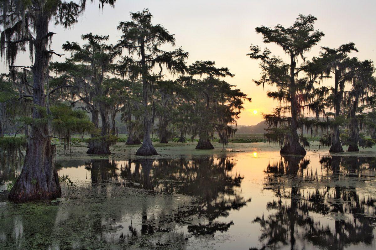 Lago Caddo (Texas y Luisiana) - Los paisajes naturales más impresionantes de Estados Unidos