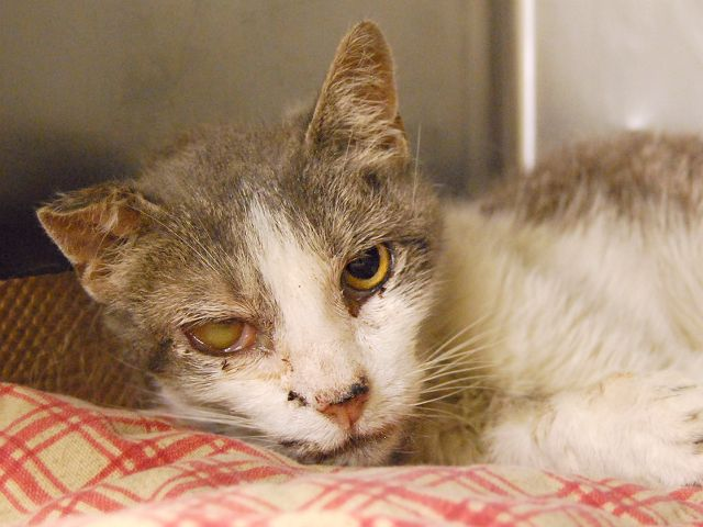 HAS POSS URI - GERIATRIC - DEHYDRATED - UNDERWEIGHT -10 YRS OLD NEEDS OUT…