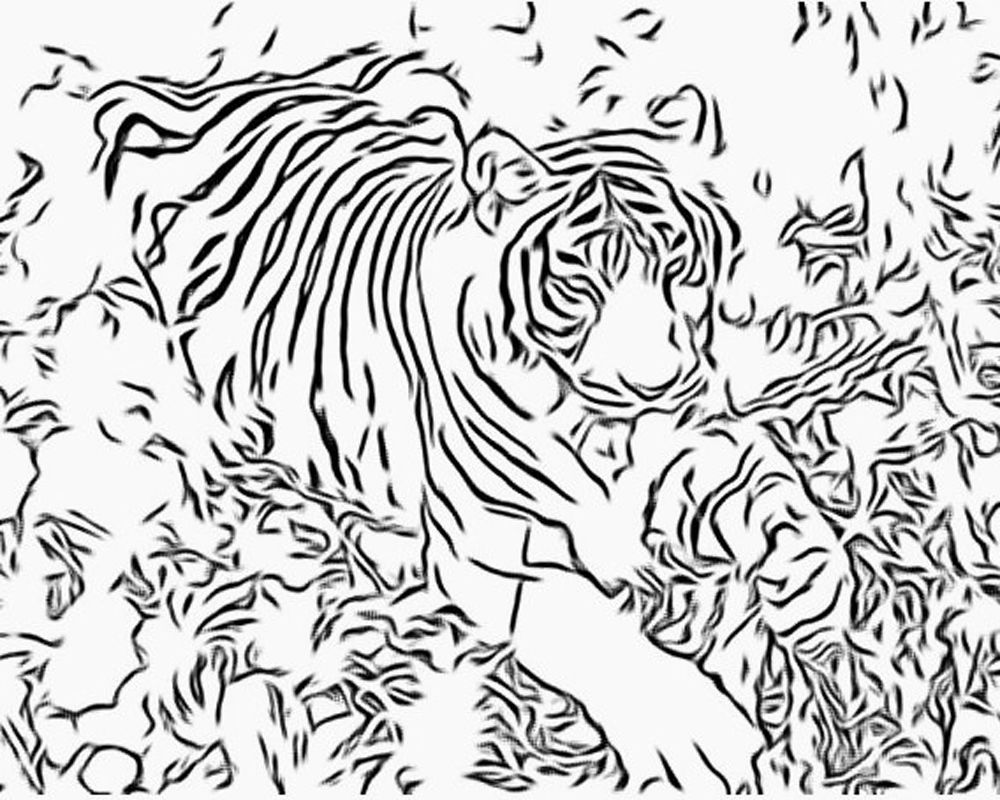 Adult Coloring Pages Intricate More Free Big Cat Coloring Pages