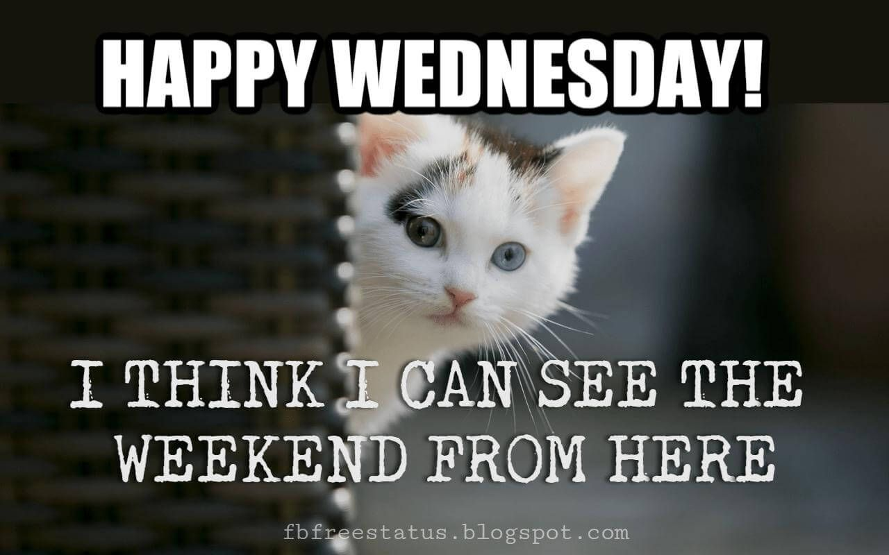 Happy Wednesday Morning Quotes with Beautiful Wednesday images | Funny good  morning messages, Funny good morning memes, Funny wednesday memes