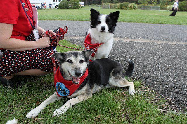 How An Epileptic Can Train A Seizure Alert Dog Epilepsy Service