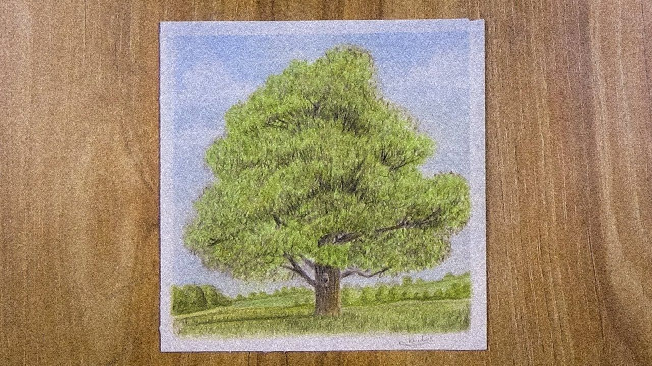 Drawing A Tree With Simple Colored Pencils Faber Castell Colored Pencils Drawings Faber Castell