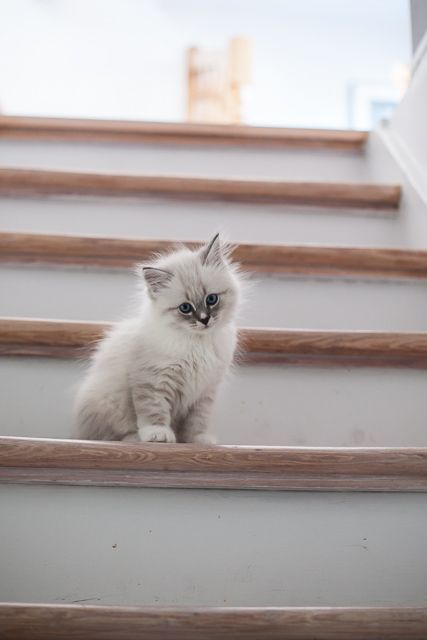 Gatinhos fofos em linha dan\u00e7ando! [FOFURAS Estes gatinhos fofos est\u00e3o alinhados e prontos para dan\u00e7ar para si! Exceto o gatinho branco. Ele \u00e0s vezes gosta de ser diferente... Confira o nosso v\u00eddeo. #kittycats