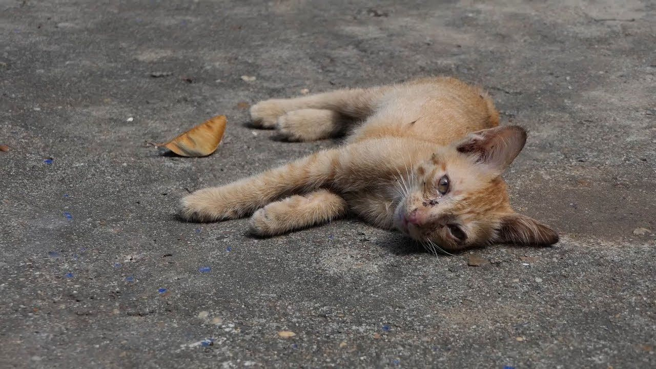 So Sadness Kitten My Tears Fall Down When I See This Thumbnail Video Kitten Falling Down Animal Rescue