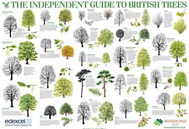 The Independent Poster Series The World About Us Tree Id Poster Series Tree Bark Identification