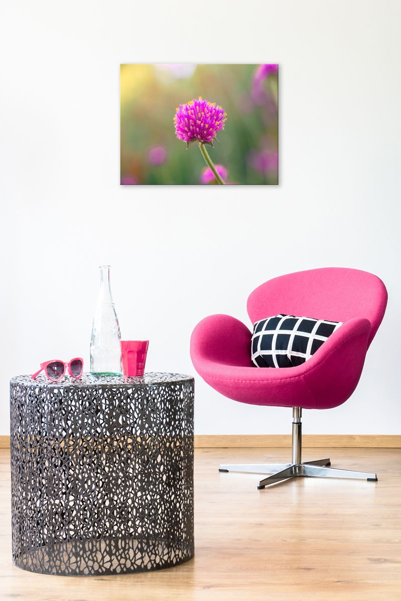 Sun anemone girl bedroom walls pink walls and room decor