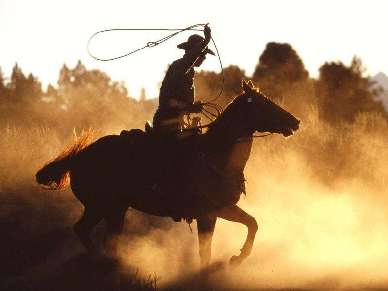 Les Fonds D Ecran Un Cheval Monte Par Un Cow Boy Avec Un Lasso Cheval Photos De Chevaux Images