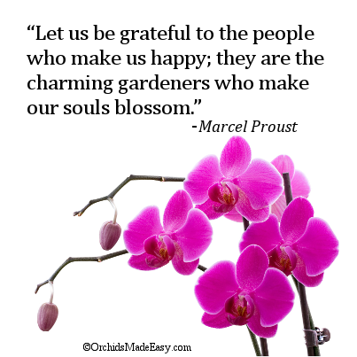 Orchid Quote Our Souls Blossom Orchidsmadeeasy Com Orchid Flower Flower Images Orchid Wallpaper